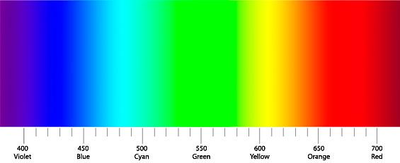 akvariumnye-krevetki-spektr-sveta-265_1