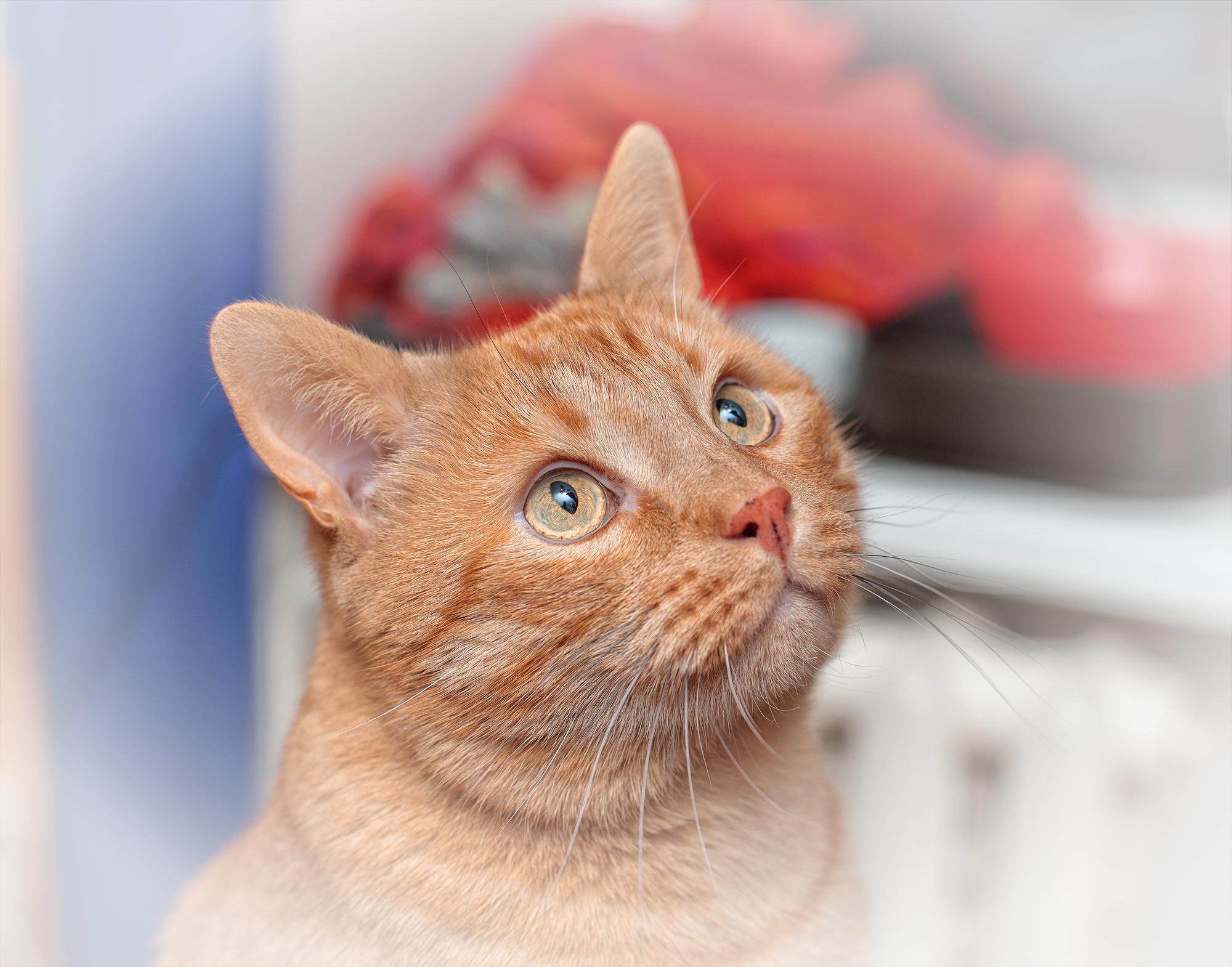 monotype, lesson, Master Class, silk, paint, workshop, hand print, монотипия, мастер-класс, семинар, урок, ручная печать, ткань, принт, шелк, рабочий процесс, work process, cat, orange, рыжий кот за работой